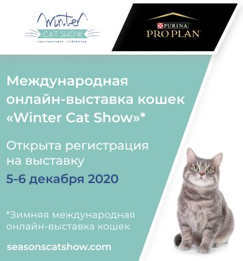 Winter Cat Show